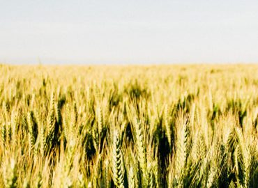 Wide Open Agriculture: Bringing Farming into the 21st Century