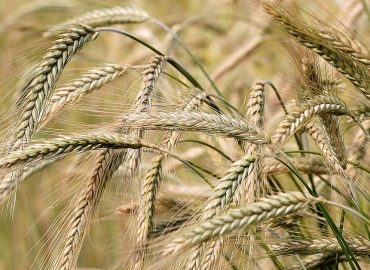 US markets continue to climb, China suspends Aussie barley imports