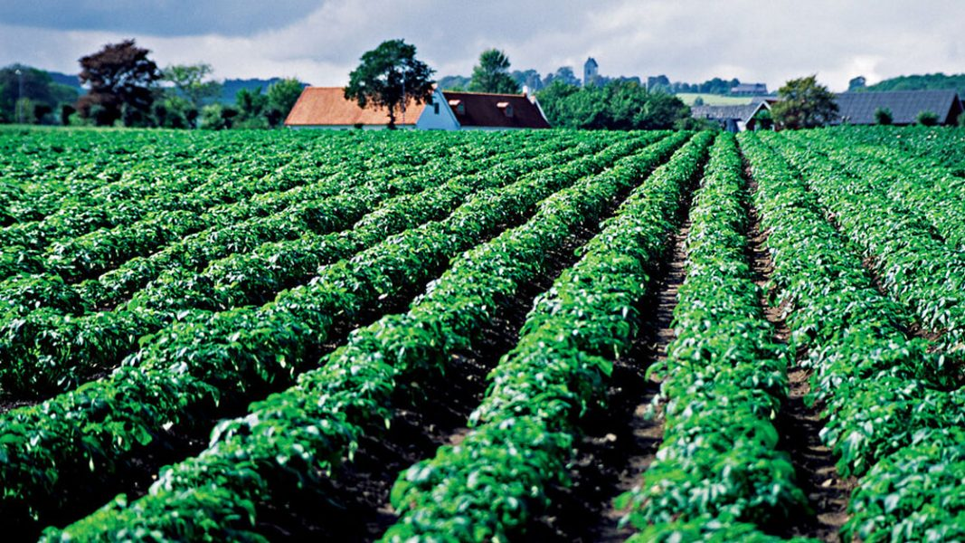 Pure Foods Tasmania eyes Aussie meals to Asia with potato farm acquisition