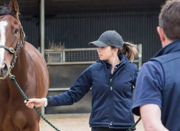 Apiam increases equine footprint in regional NSW with new veterinary acquisitions