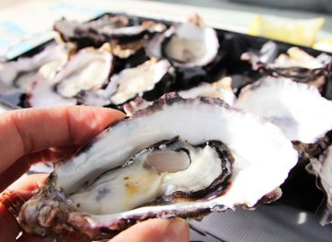 Summer oysters trial tipped to increase Angel Seafood sales by 15%