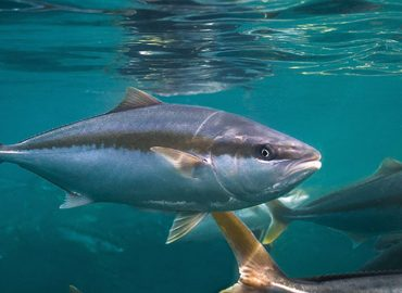 Return of dining sends Clean Seas fish sales up 39%, back to pre-pandemic levels