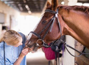 Apiam expands equine vet footprint in Queensland in time for breeding season