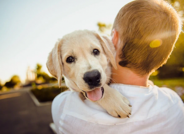 Acquisition spree continues as Apiam adds another vet clinic amid pet ownership boom