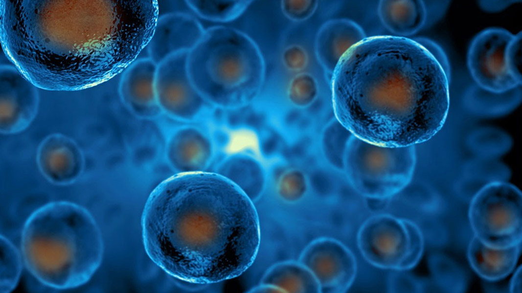 Body of evidence grows for Cynata's stem cell production platform