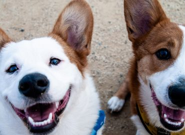 Why this human dermatology company is now looking into treatments for dogs